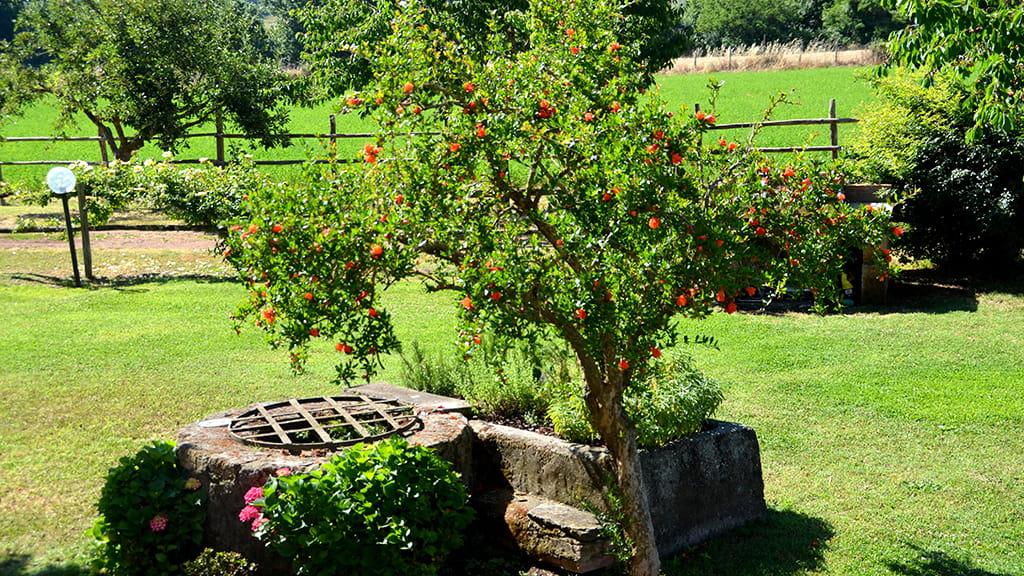 Casa Olmo Bello Garten