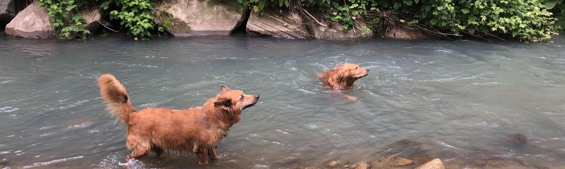 Urlaub Mit Hund Fluss