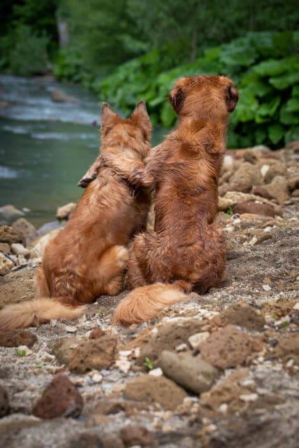 Hunde Am Fluss