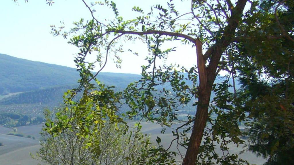 Ferienwohnung La Luce Acacia Ausblick