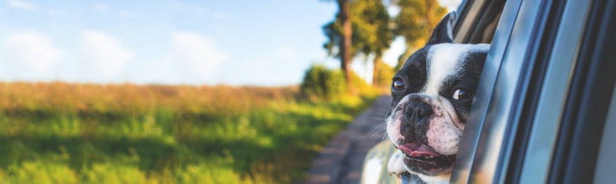 Anreise Hund